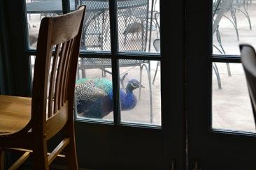 ABQ Zoo - 08-03 - 003
