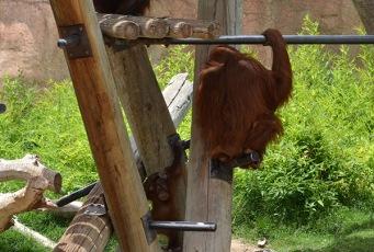 ABQ Zoo - 08-03 - 006