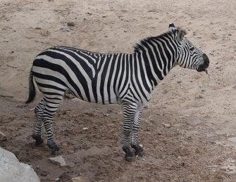 ABQ Zoo - 08-03 - 009