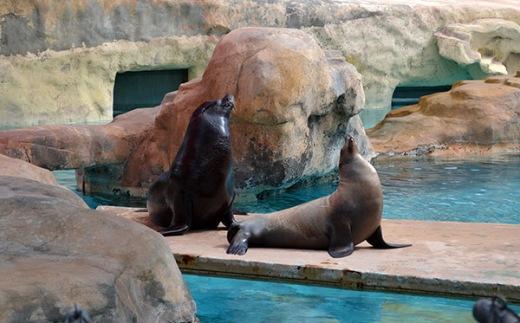 ABQ Zoo - 08-03 - 013