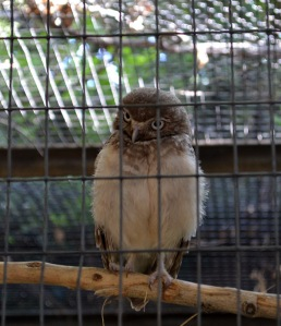 ABQ Zoo - 08-03 - 016