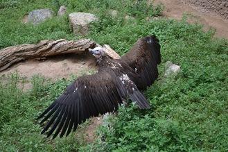 ABQ Zoo - 08-03 - 017