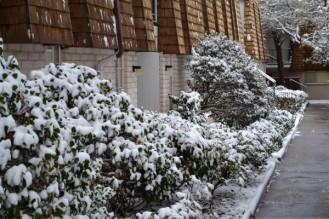 2015-02-27 snow 3