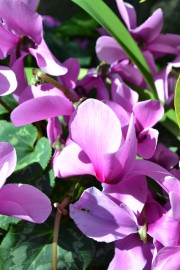 Botanical Gardens 012