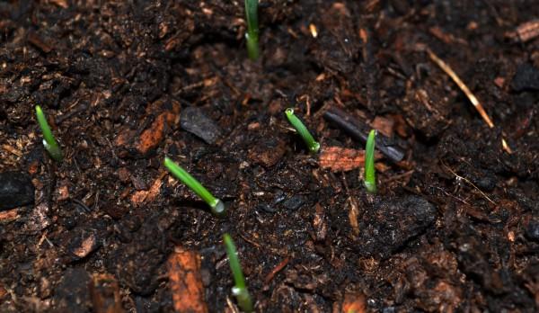 Catgrass 4-22b