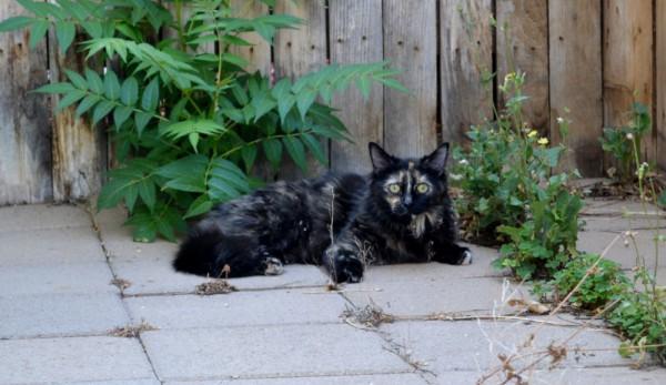 Neighbor Cat 2
