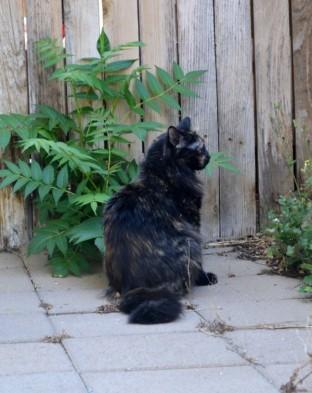 Neighbor Cat 3