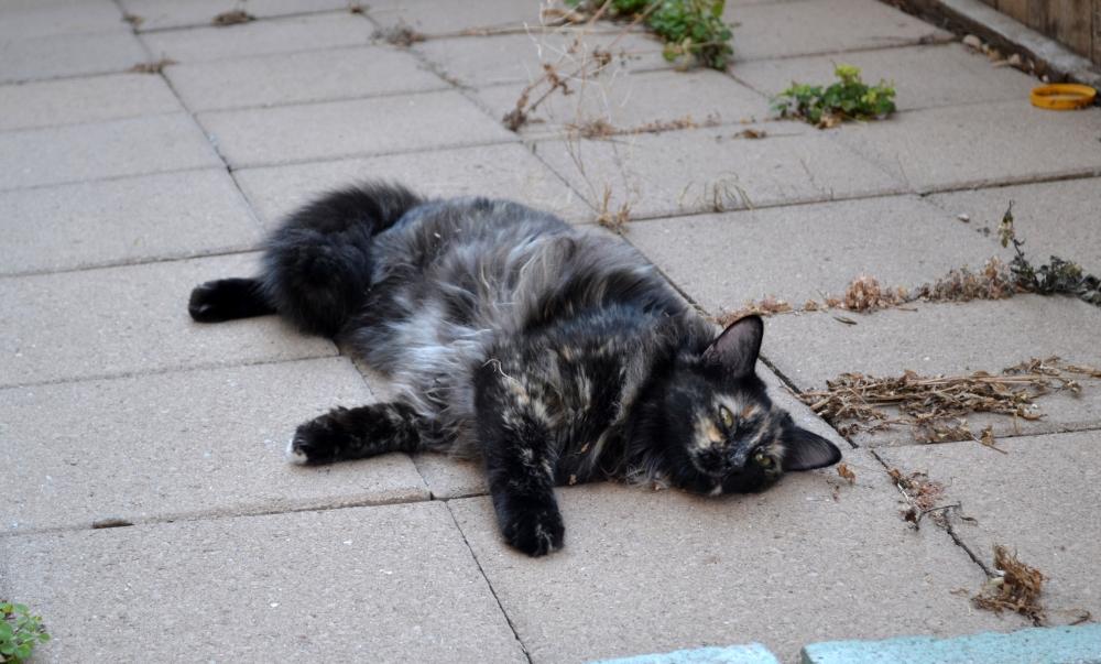 Neighbor Cat 4
