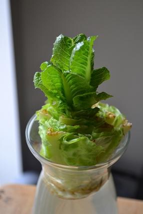 Lettuce 03-29-2016