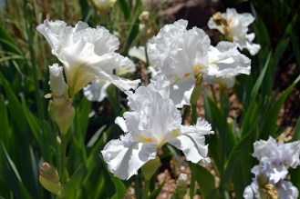 Flower 2b