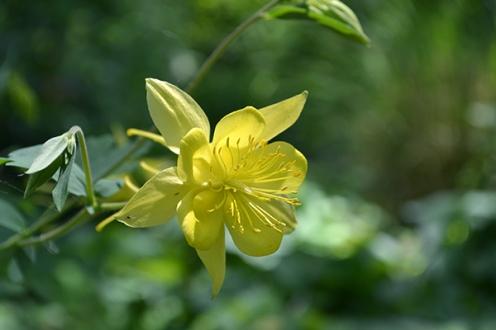 Flower 9b