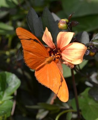 Butterfly 14B