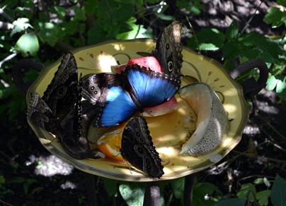 Butterfly 3B