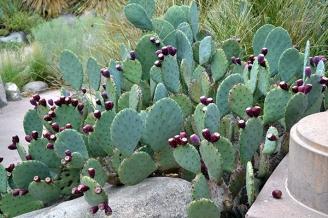 Cactus 1B