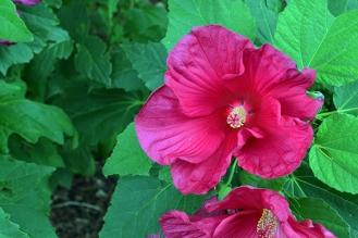 Flower 1B