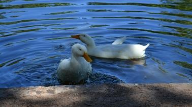 duck-pond-4