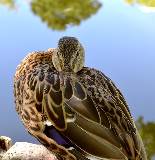 duck-pond-8