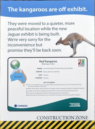 construction-kangaroo