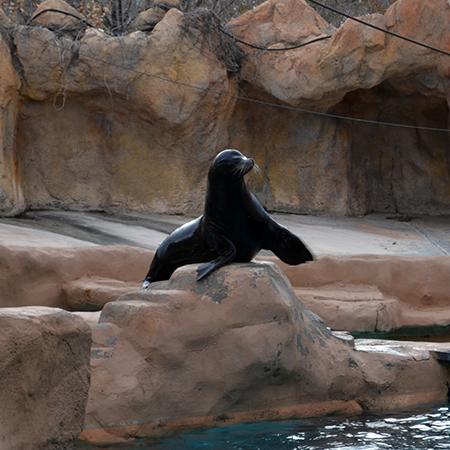 sea-lion-1