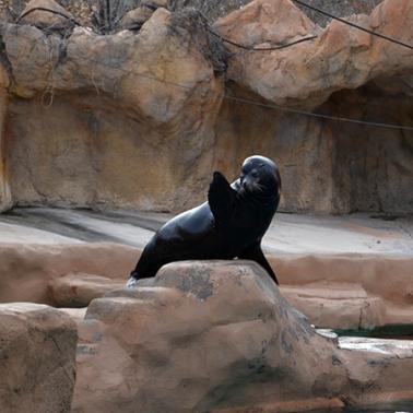 sea-lion-2