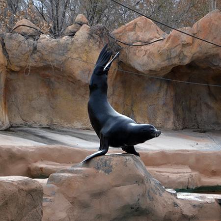 sea-lion-3
