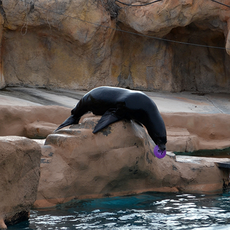 sea-lion-4